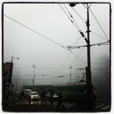 misty wires