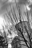 trees and old church