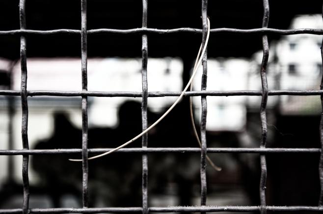 caged 001